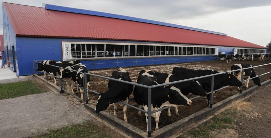 проектирование животноводческих ферм и комплексов
