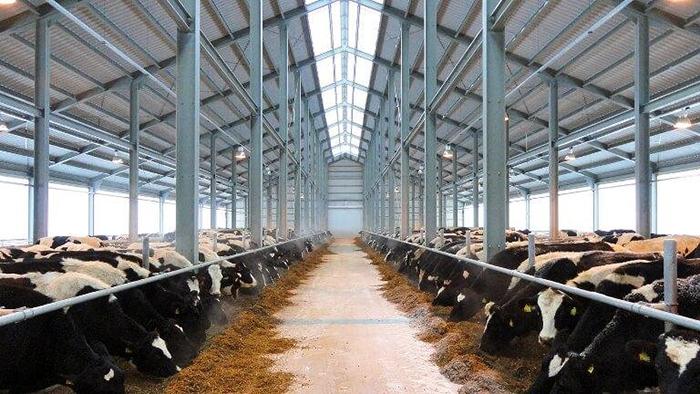 Ферма для КРС