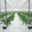 Гідропоніка – нове слово в аграрній справі